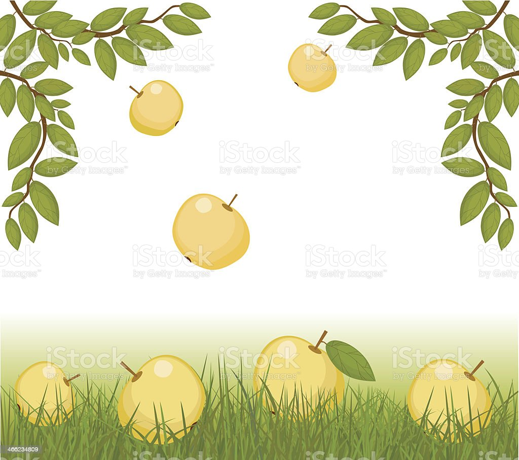 Branches  and  Apples On Grass royalty-free stock vector art