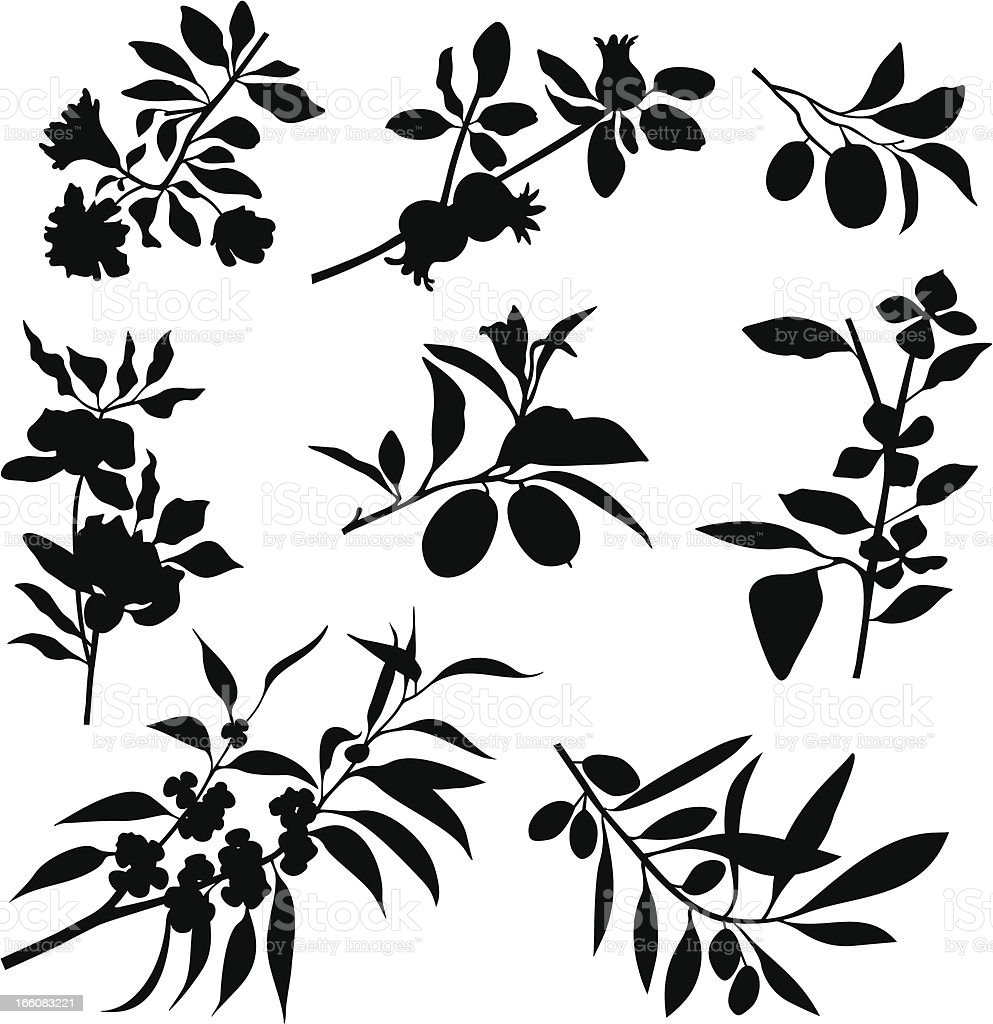 Branches, flowers, fruits vector art illustration