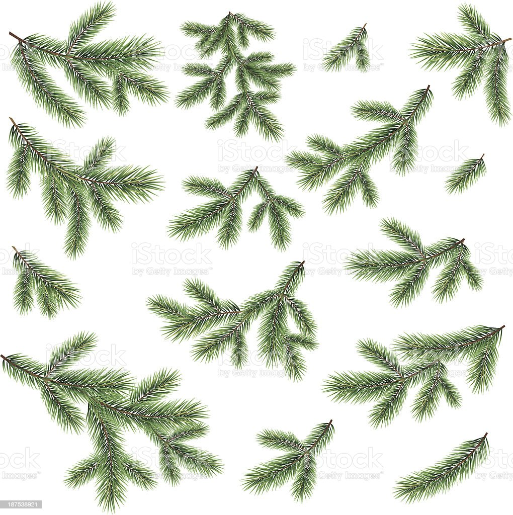 Branches of a Christmas tree vector art illustration