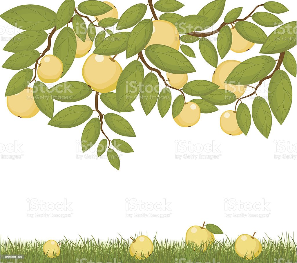 Branches of Apples And Fruit On Grass vector art illustration