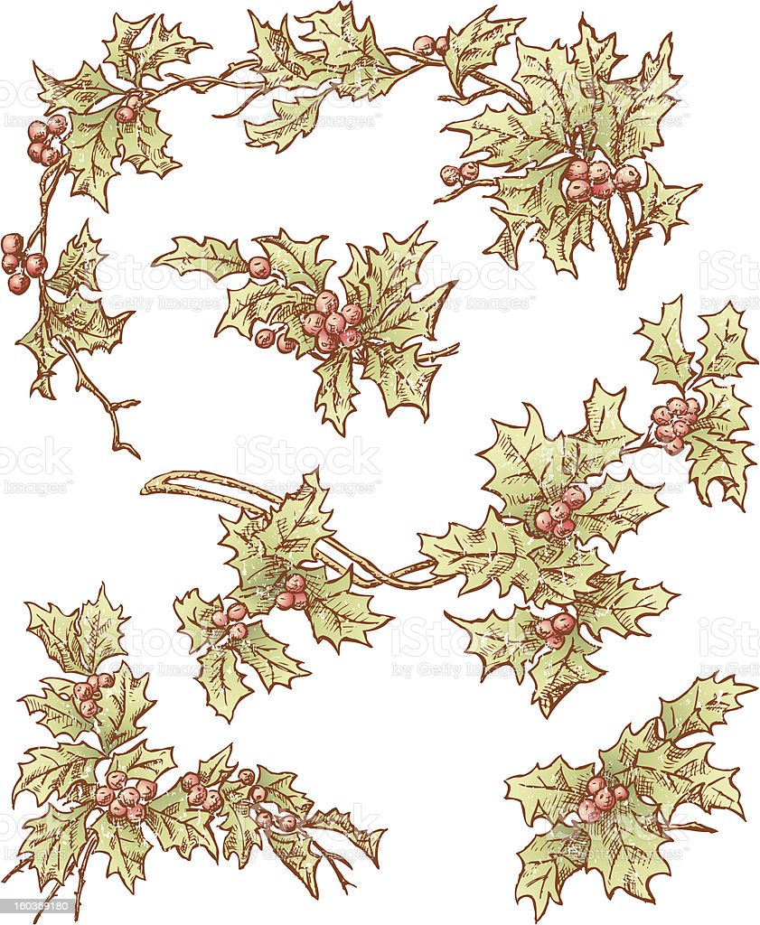 branches of holly royalty-free stock vector art