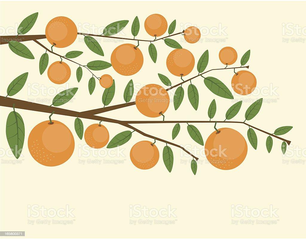 Branches Of Orange Tree vector art illustration