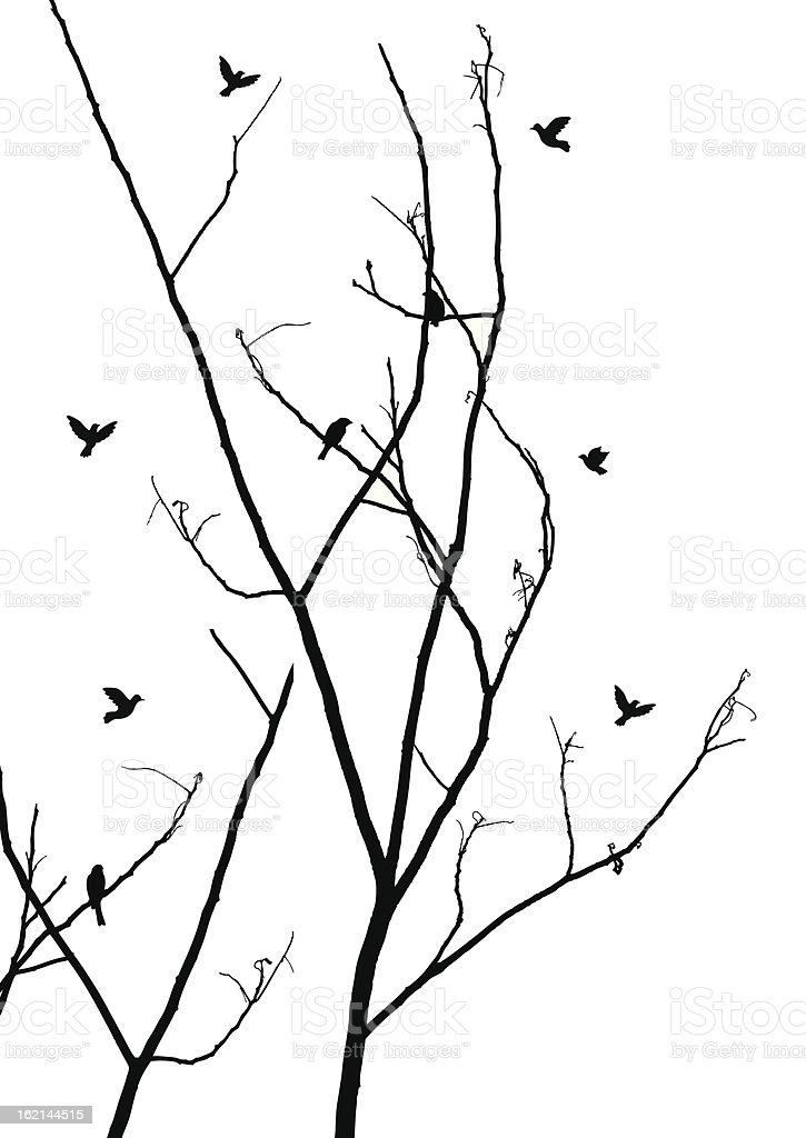 branches with birds royalty-free stock vector art