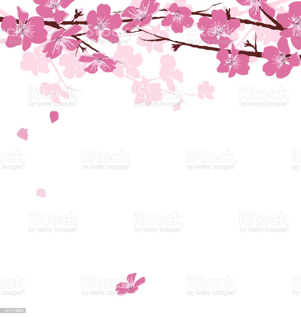 Branches with flowers isolated on white vector art illustration
