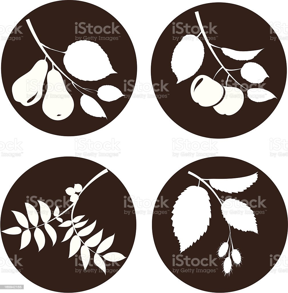 Branches with fruit vector art illustration