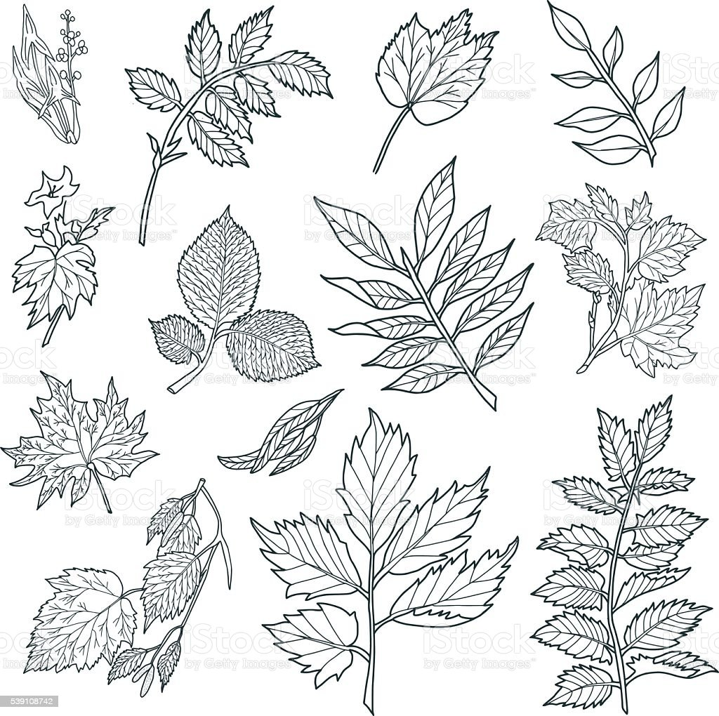 Branches with Leaves vector art illustration