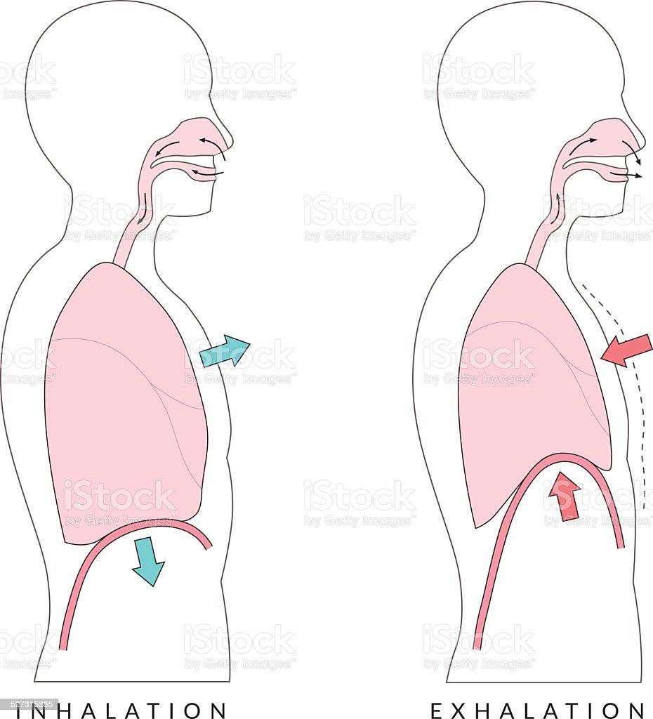 Breathing vector art illustration
