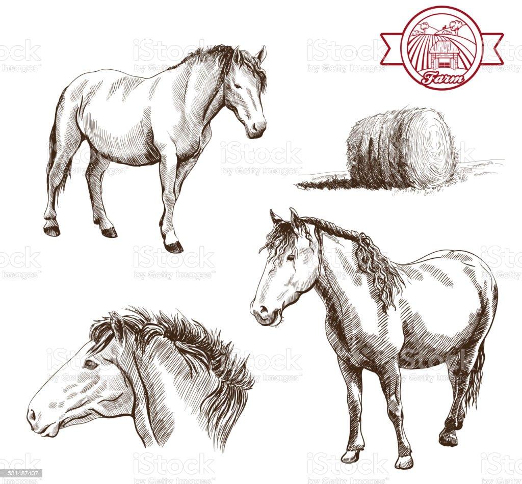 breeding horses vector art illustration