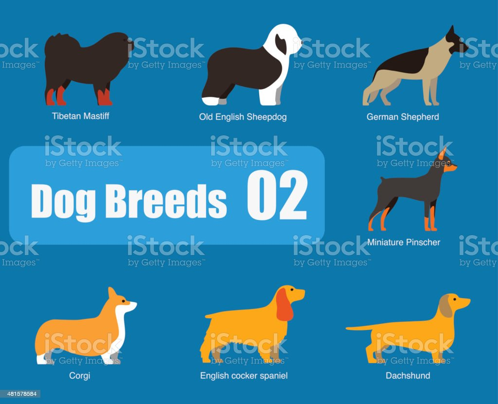 Breeds of dog standing side, vector vector art illustration