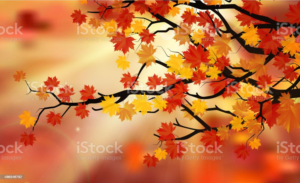 Bright colorful leaves on the branches in the autumn forest vector art illustration