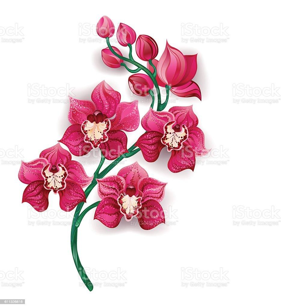 bright pink orchid vector art illustration