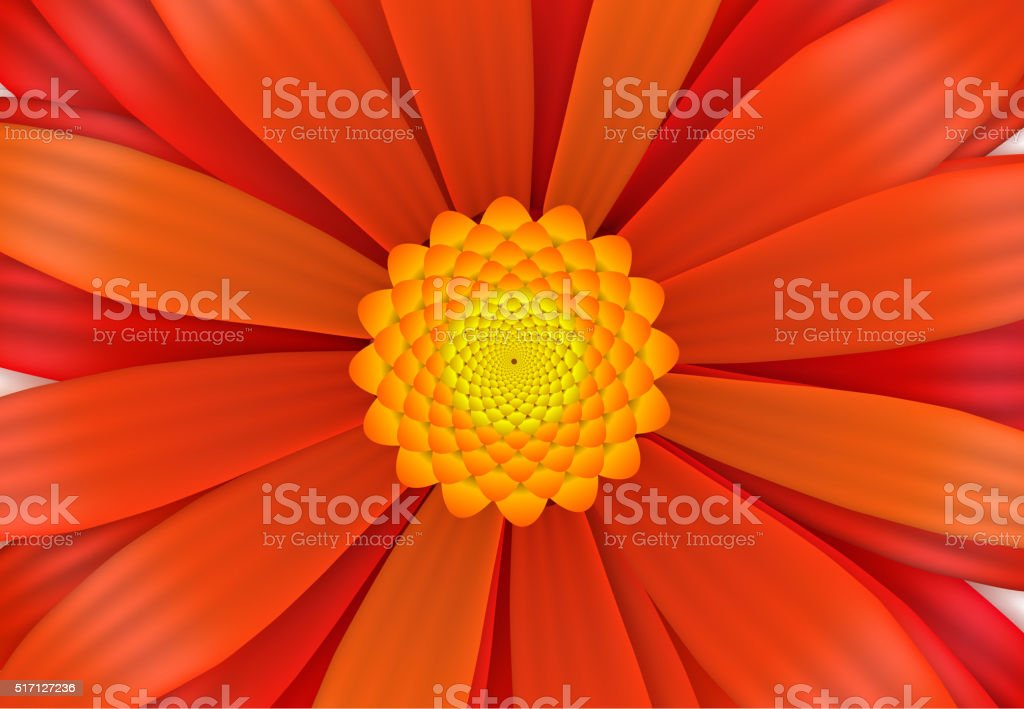 Bright red gerbera flower in bloom, a4 size vector art illustration