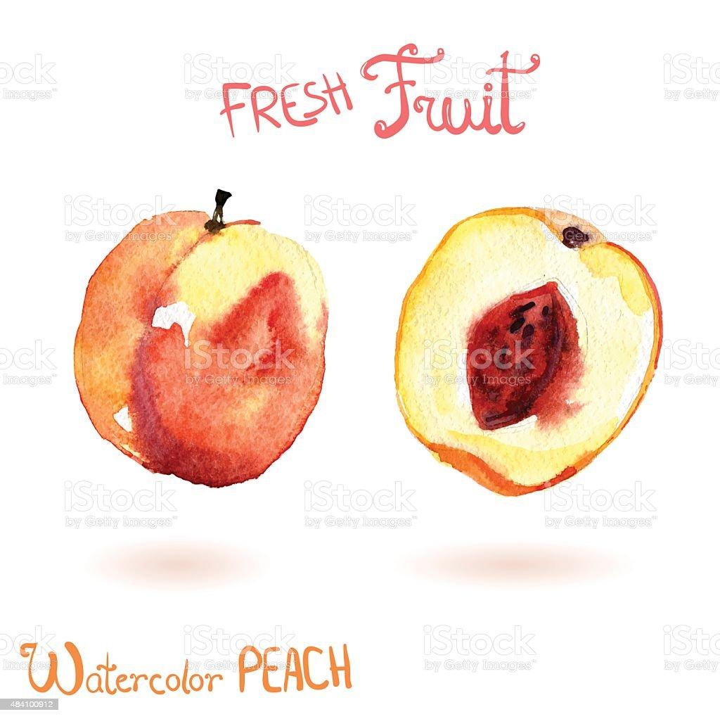Bright vector watercolor hand drawn fruit peach vector art illustration
