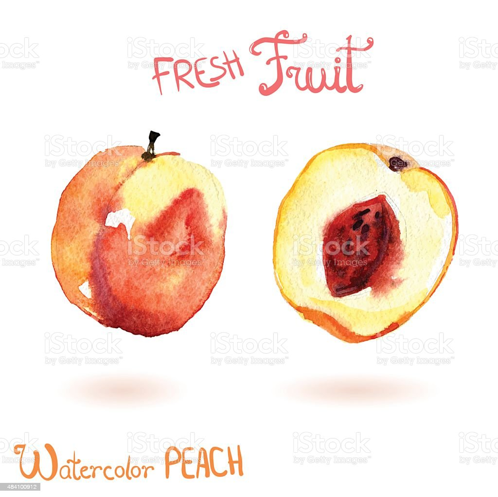 Bright vector watercolor hand drawn fruit peach vector art illustration