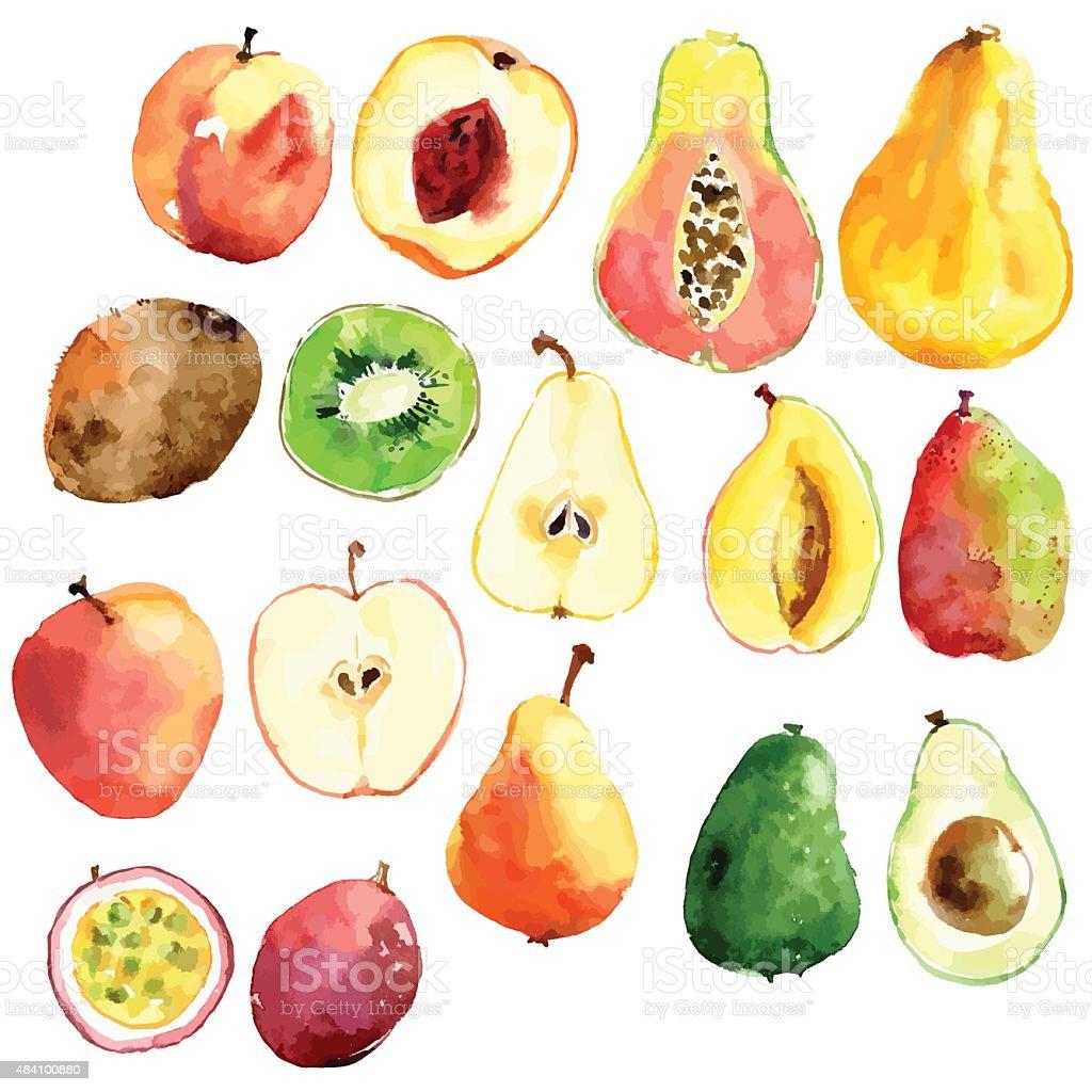Bright vector watercolor hand drawn fruits: apple, pear, peach, vector art illustration