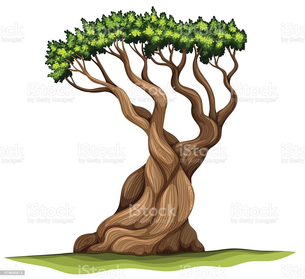 Bristlecone pine tree vector art illustration