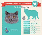 British Shorthair Cat breed vector infographics