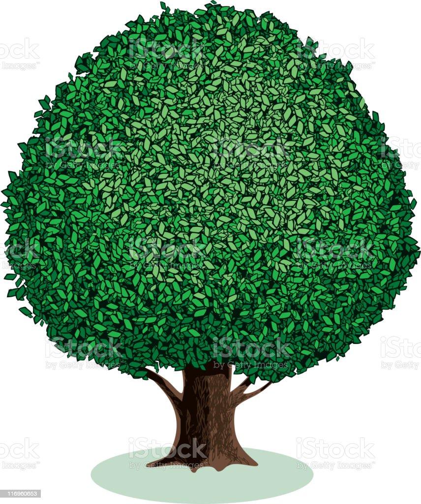 Broad-leaved tree vector art illustration