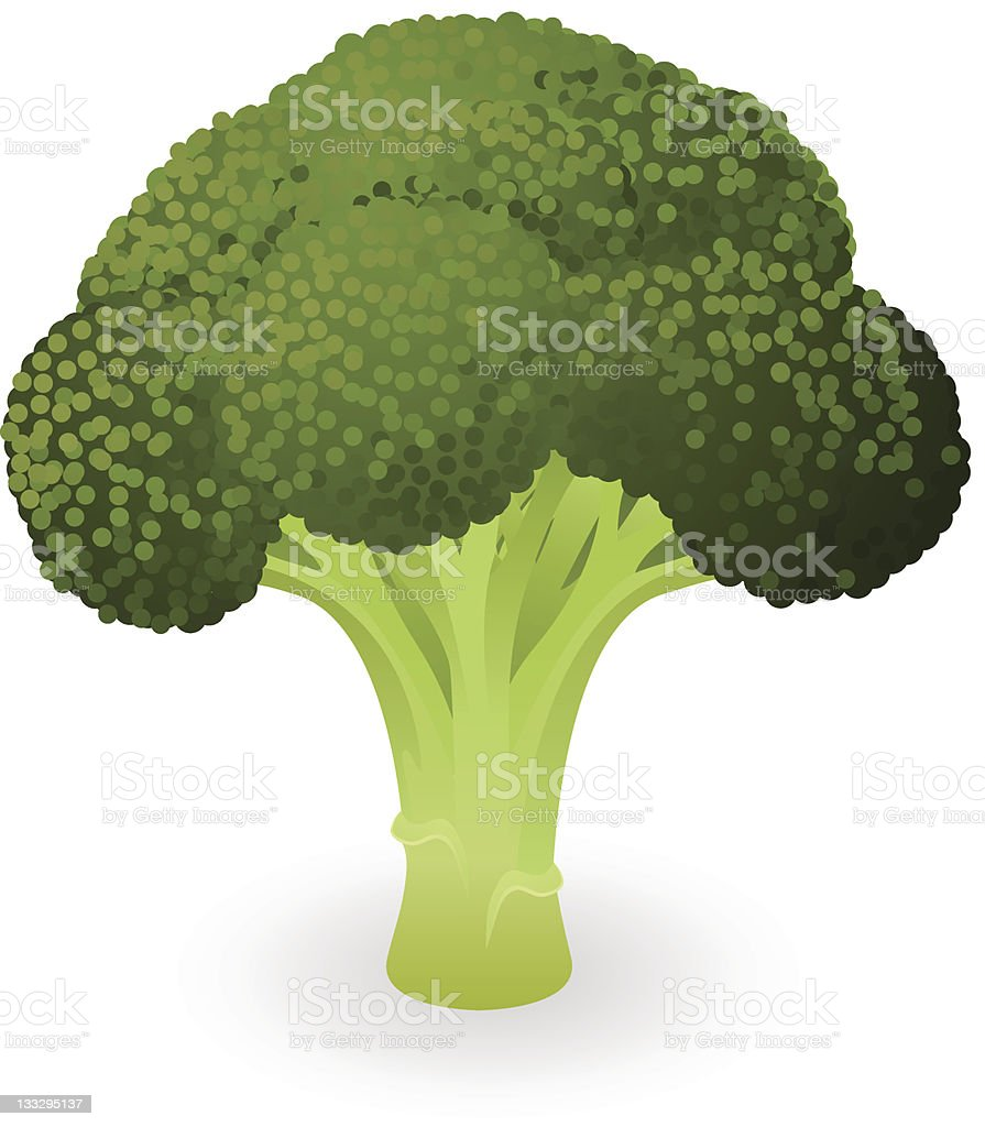 Broccoli illustration royalty-free stock vector art