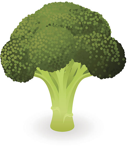 Broccoli Clip Art, Vector Images & Illustrations - iStock