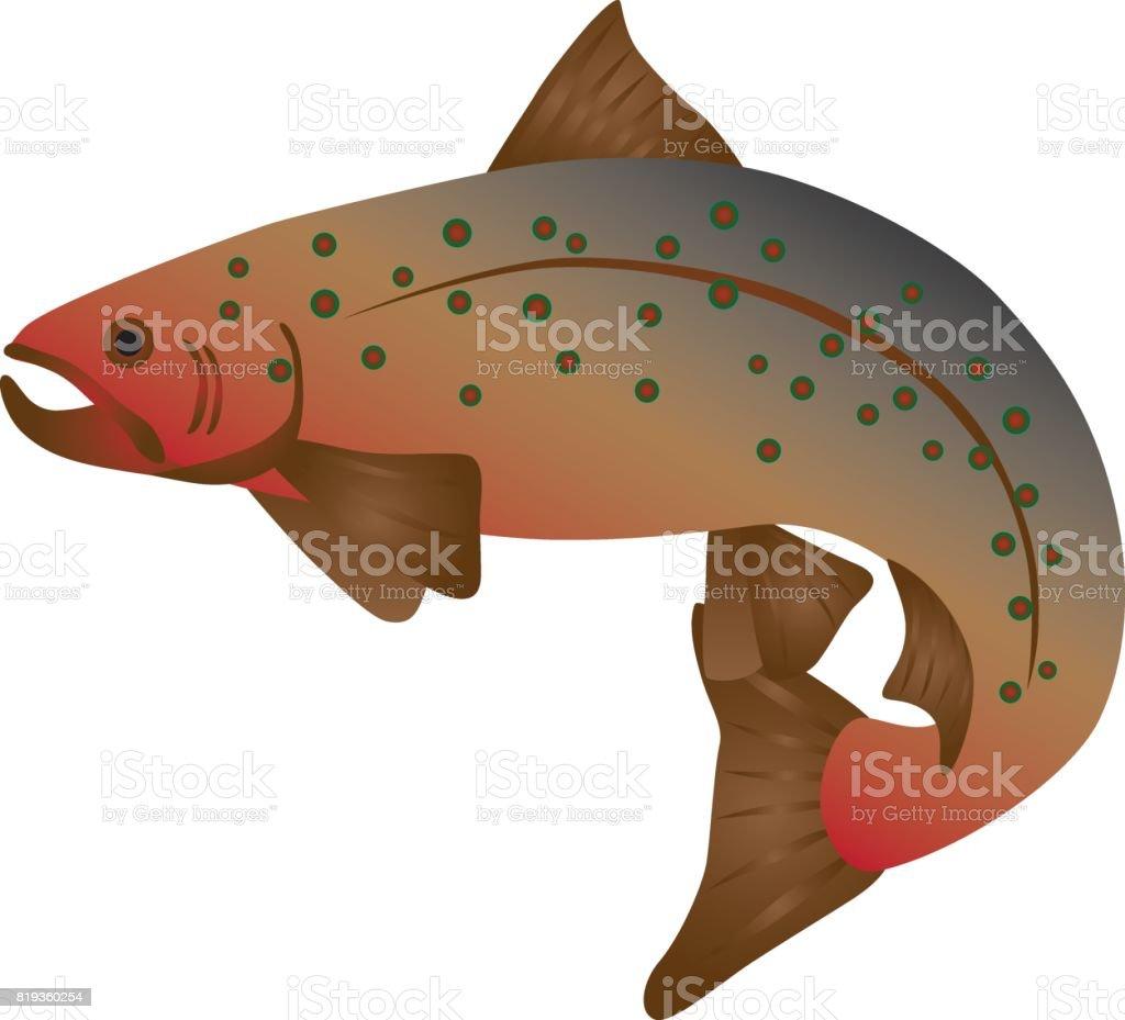 Brook Trout Color Illustration vector art illustration