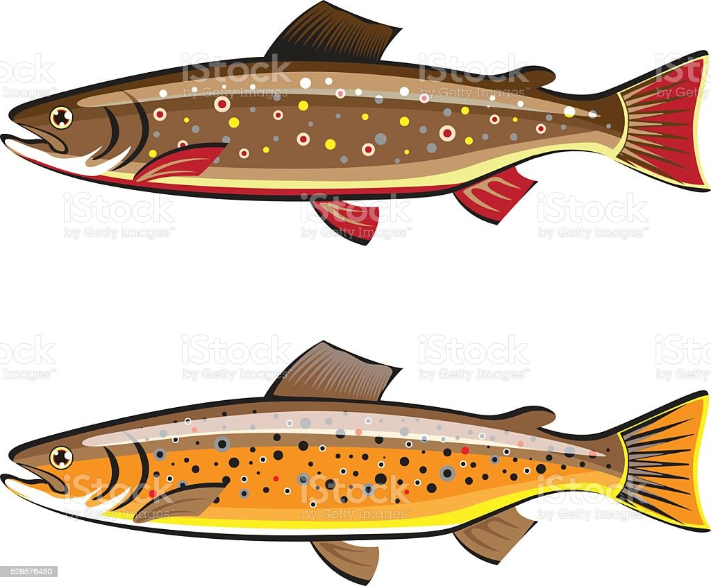 Brown and brook trout fish vector vector art illustration