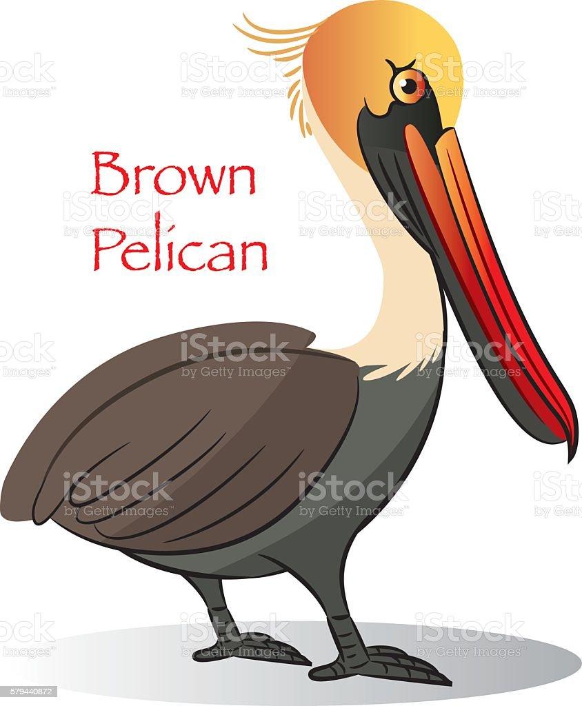 Brown Pelican vector art illustration