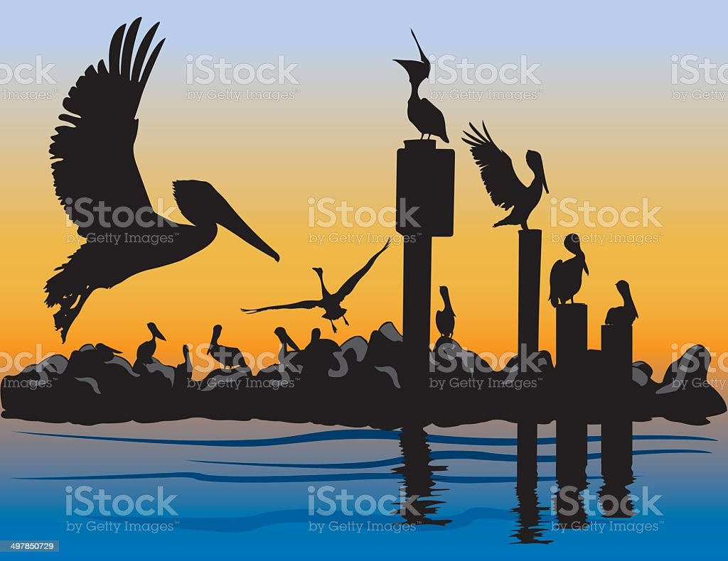 Brown Pelicans at Sunset vector art illustration
