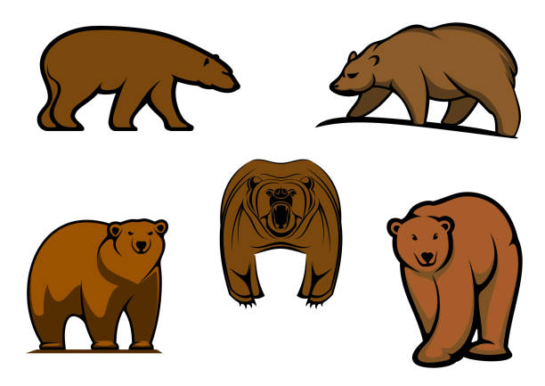 Brown Bear Clip Art, Vector Images & Illustrations - iStock