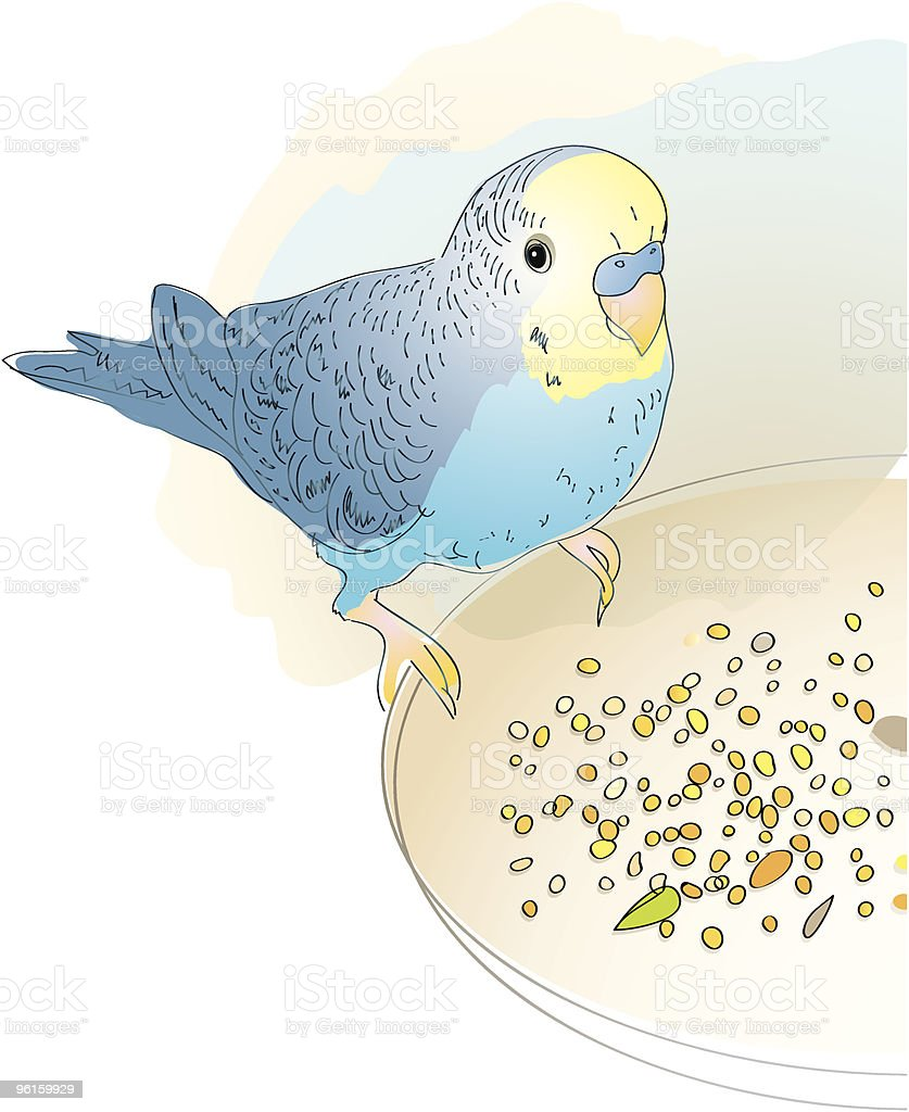 Budgerigar royalty-free stock vector art