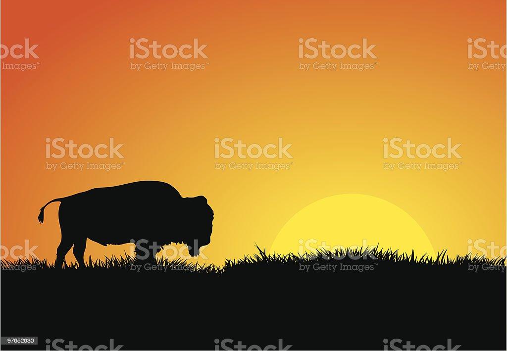 Buffalo at Sunset royalty-free stock vector art