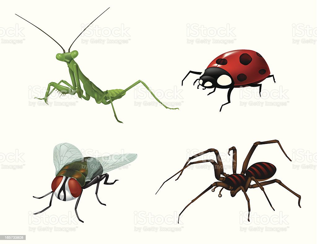 Bugs and Insects royalty-free stock vector art