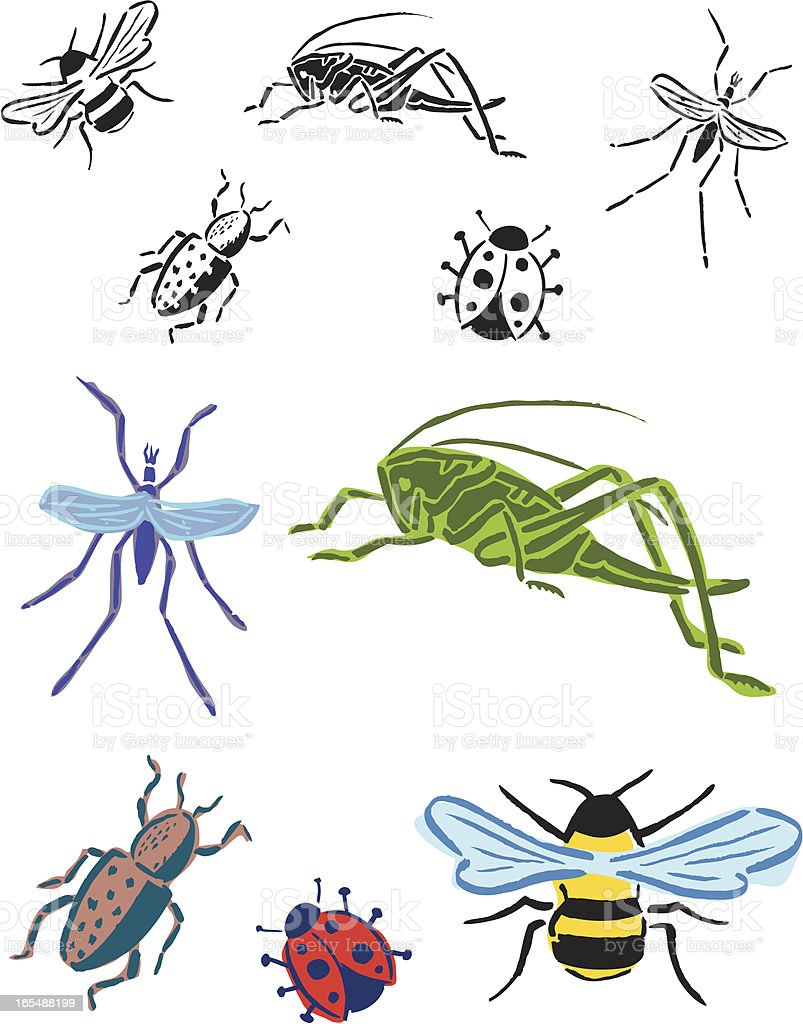 Bugs - Bee, Grasshopper, Beetle, Lady Bug, Mosquito royalty-free stock vector art