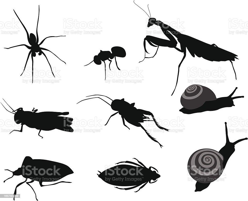 Bugs Bugs Vector Silhouette vector art illustration