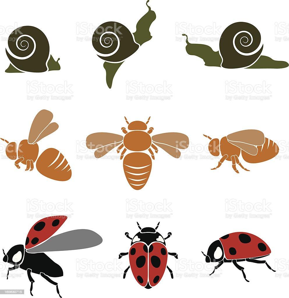 Bugs vector art illustration