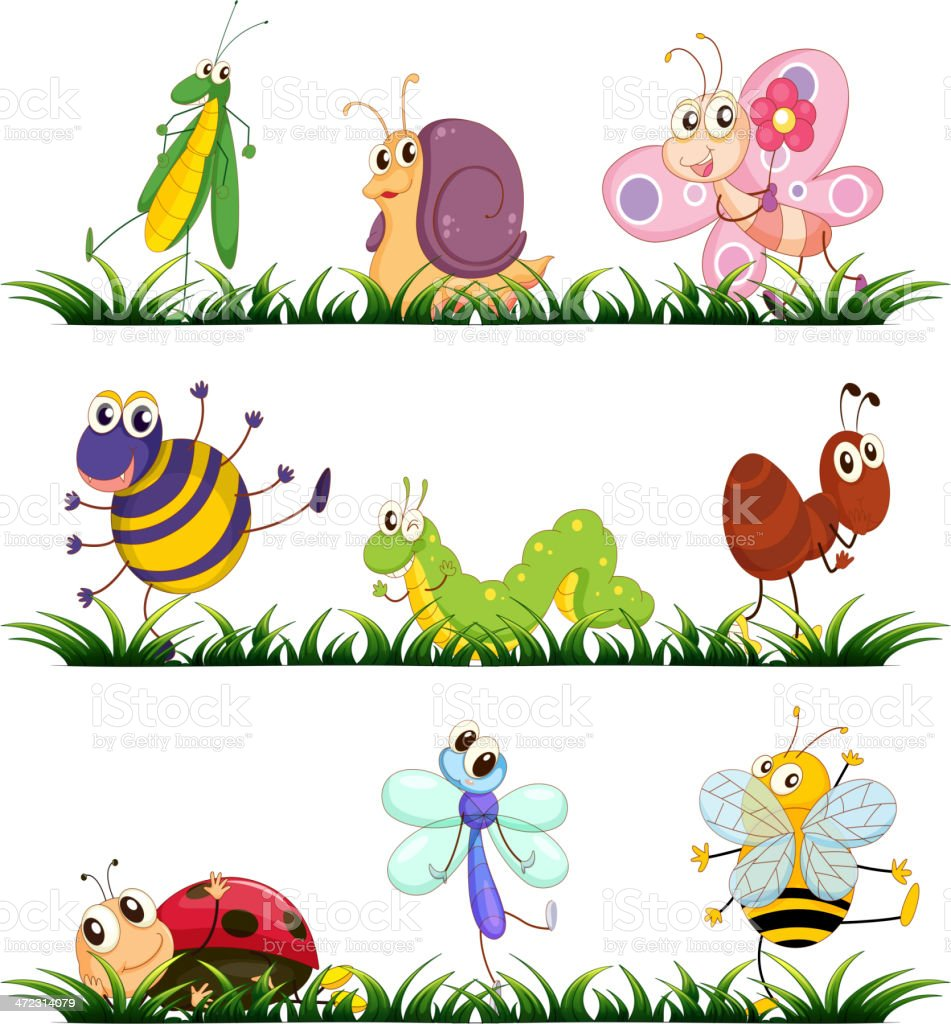 Bugs vector art illustration
