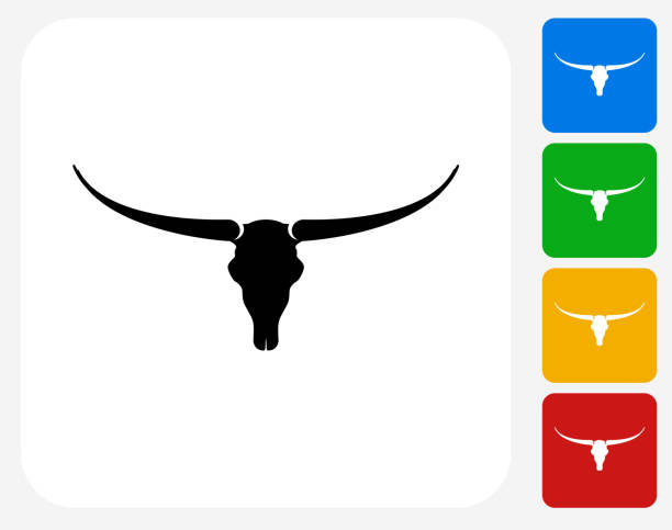 Texas Longhorn Cattle Clip Art, Vector Images & Illustrations - iStock