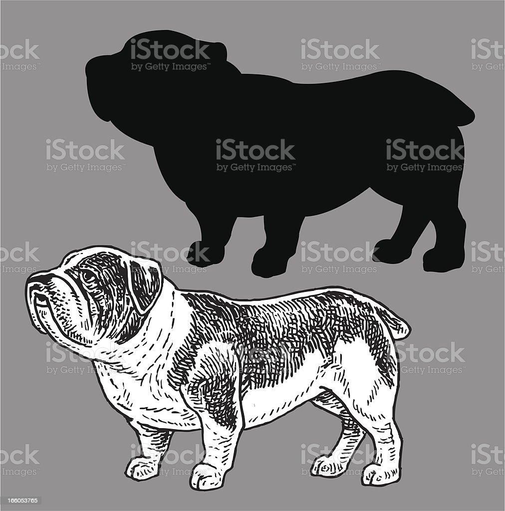 Bulldog royalty-free stock vector art