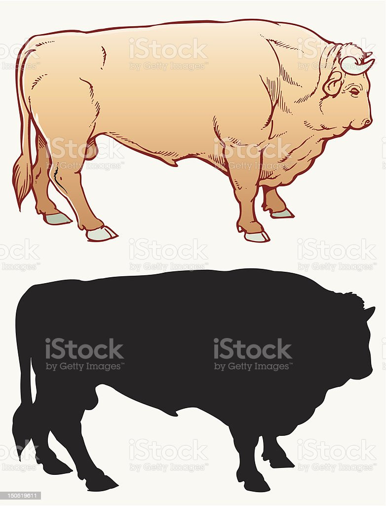 Bulls royalty-free stock vector art