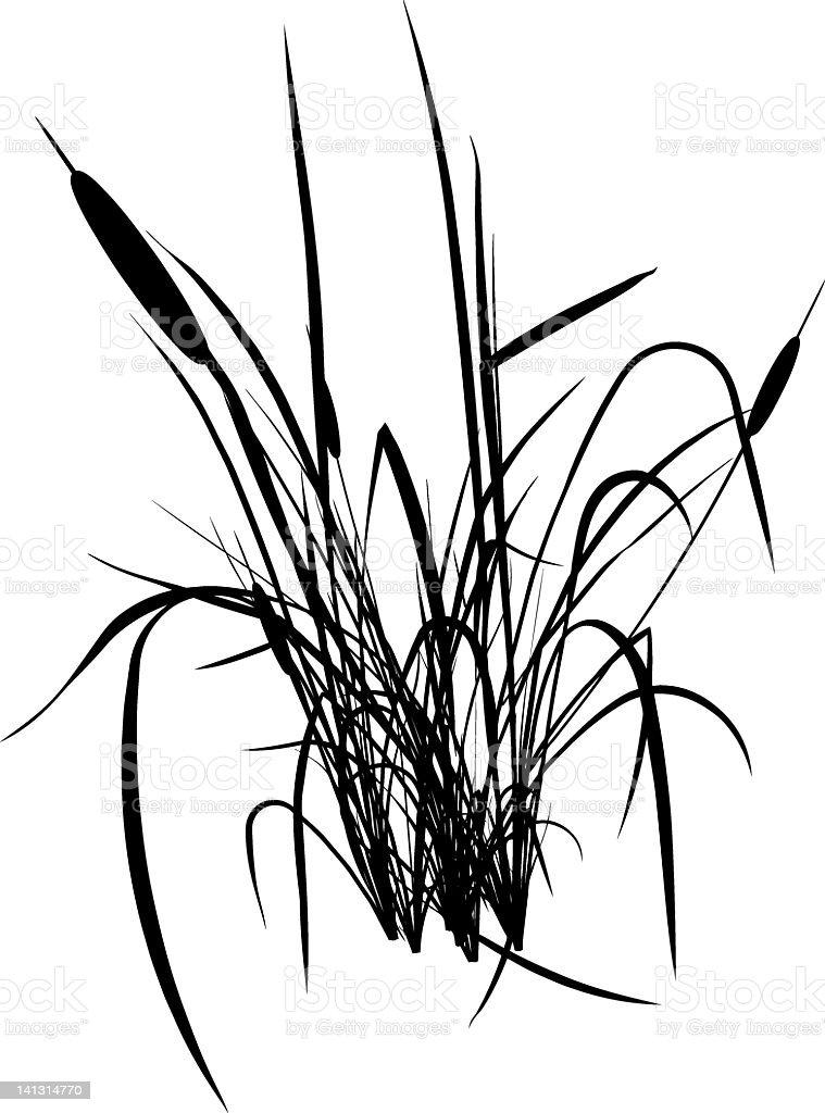 bulrush silhouette royalty-free stock vector art