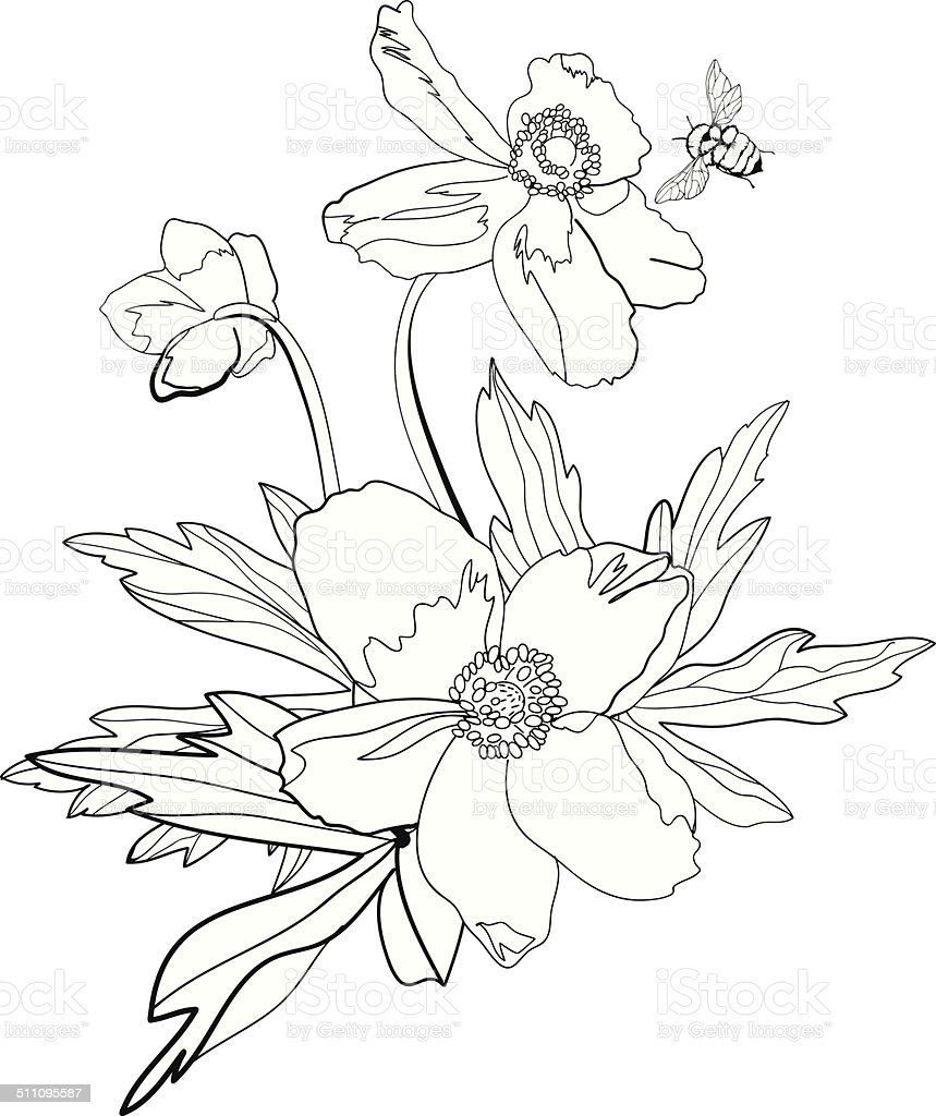 Bunch of anemones and buttercups, isolated vector art illustration