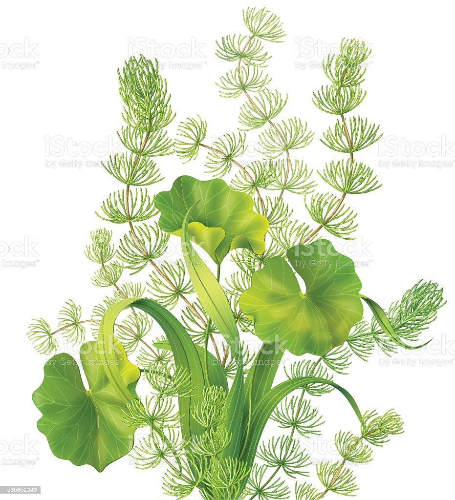 Bunch of aquatic plants vector art illustration