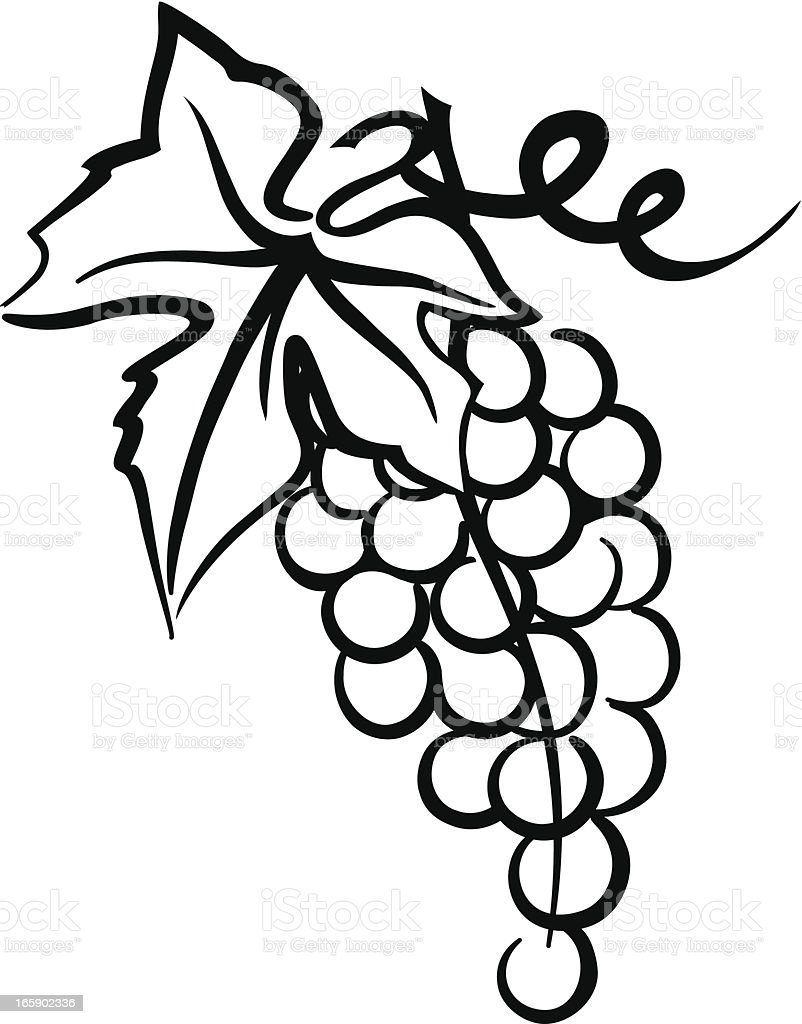 Bunch Of Grapes Simple Drawing with Leaf  Swirly Vine royalty-free stock vector art