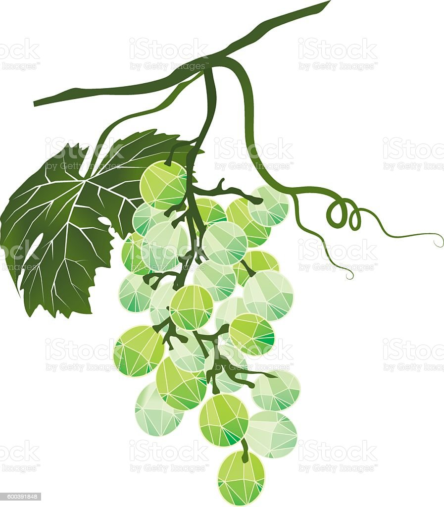 Bunch of green grapes stylized polygonal vector art illustration