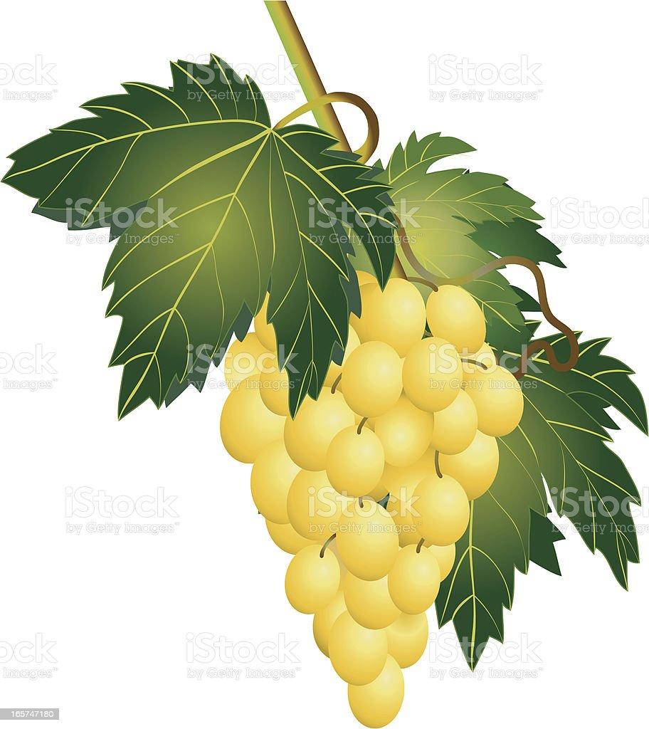 Bunch of green grapes vector art illustration