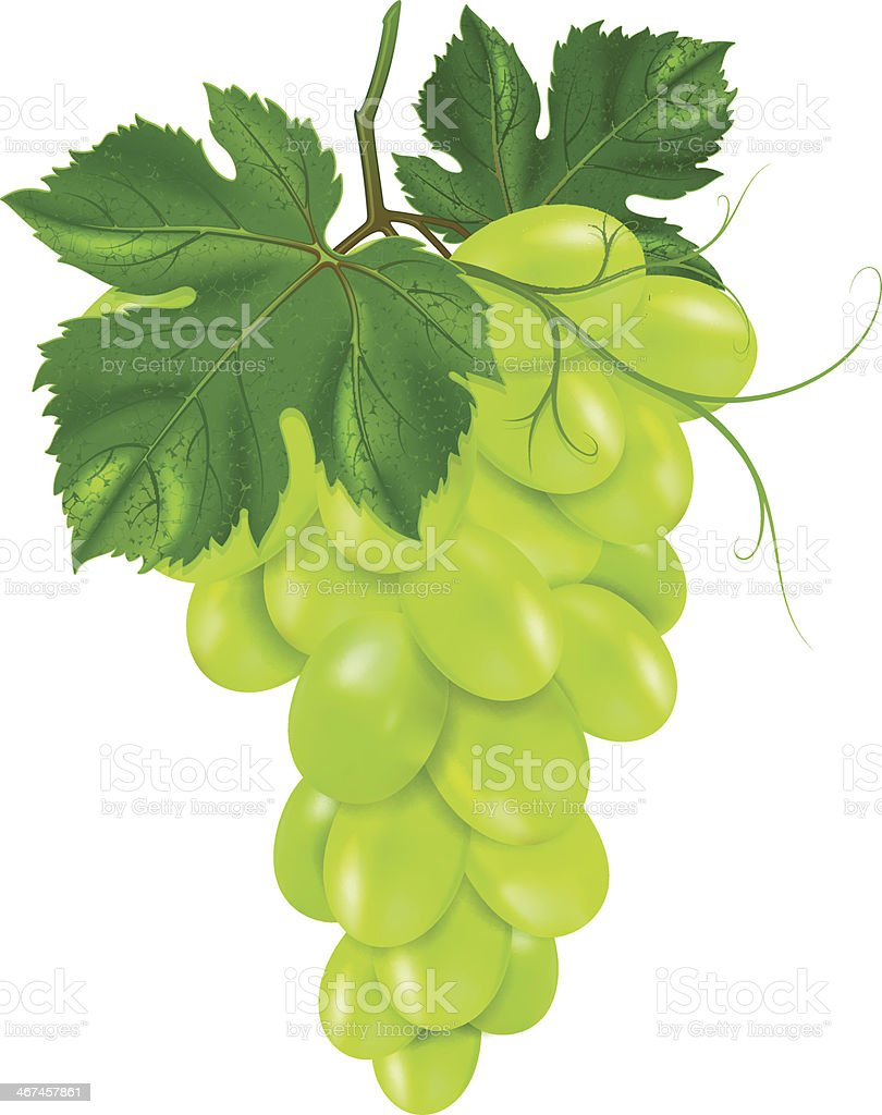 Bunch of Green Grapes vector art illustration