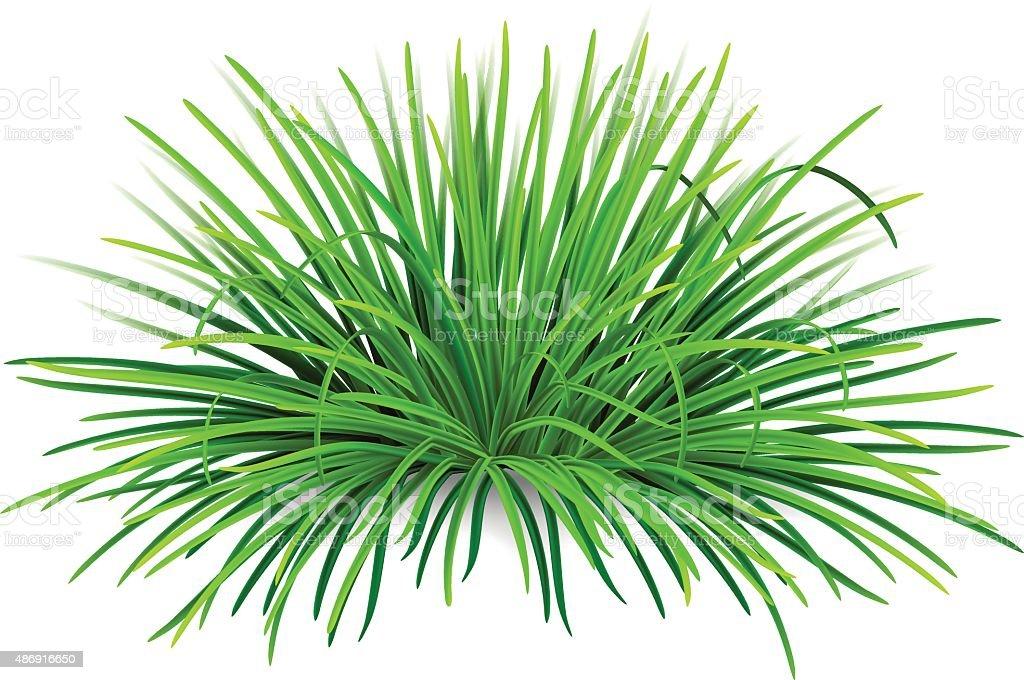 Bunch of green grass vector art illustration