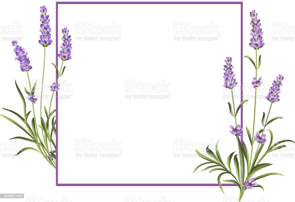 Bunch of lavender vector art illustration
