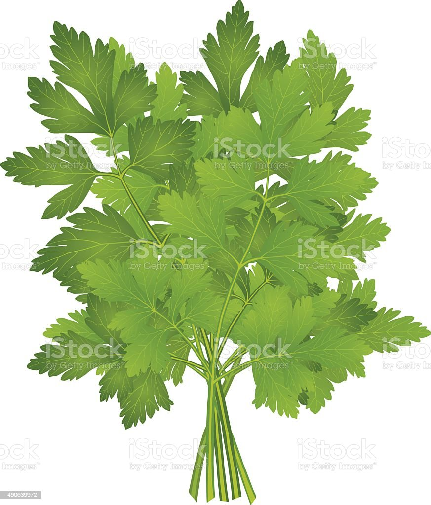 bunch of parsley vector art illustration