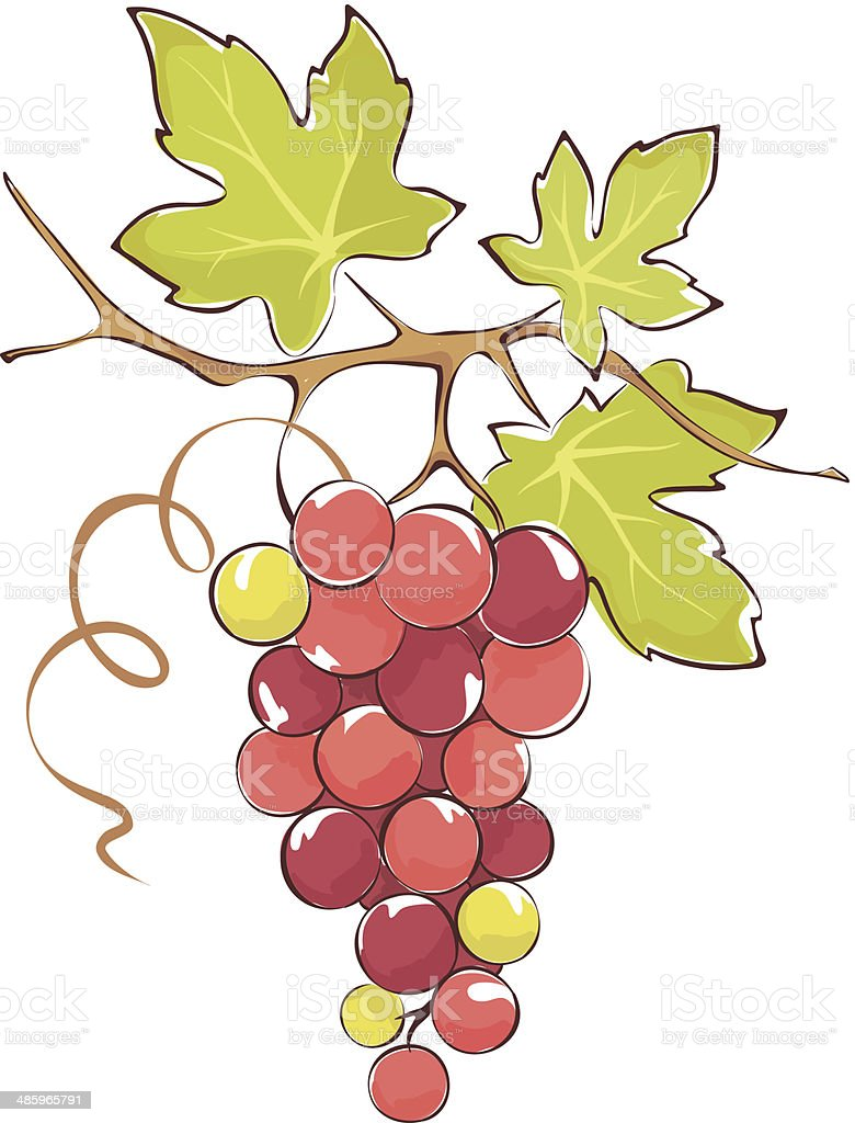 Bunch of pink grapes vector art illustration